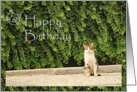 Happy Birthday - cat in a park card