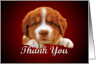 Thank You - puppy against dark red card