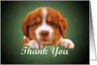 Thank You - puppy against dark green card