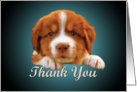 Thank You - puppy against dark blue card