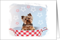 Happy 4th of July from a Cute, Patriotic Dog card