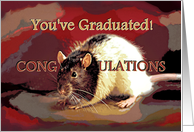 Happy Graduation, Congratulations Pet Rat, Head of the Pack card