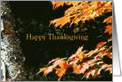 Happy Thanksgiving Birch Tree Orange Maple Leaves card