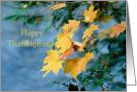 Happy Thanksgiving Maple Leaves Yellow Orange card