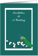 Peacock, teal wedding invitation,bird, hearts within white frame, card