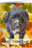 Humorous Thanksgiving Card - Dog with Leaf on Nose card