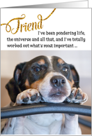 Friend Funny Birthday Card - Dog Pondering Life and The Universe card