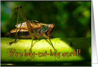 Happy Birthday . . . Bug-Eat-Bug World For Bug Lovers card