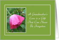 Encouragement - Grandmother's Love - Pink Poppy card