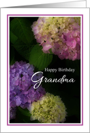 Happy Birthday Grandma, Pretty Hydrangia Card