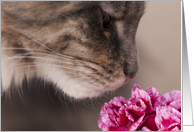 Thinking of You Maine Coon Cat and Carnations Card