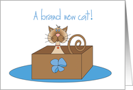Congratulations on Cat Adoption, Kitty in Box with Bow card