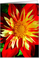 Joyful Red & Yellow Floral card