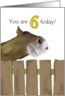 6th birthday, smiling horse behind wooden fence card