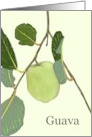 Guava Fruit on Branch Blank card