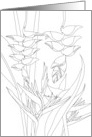 Thinking of You Heliconia Flowers and Foliage Coloring card