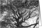 Encouragement, Majestic tree in black and white, photograph card