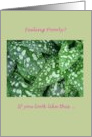 Get well, Humor, Spotted pulmonaria leaves card
