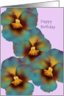 Birthday for sorority sister, Blue and yellow pansies card