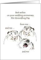Wedding anniversary on Groundhog Day, wishes from all the groundhogs card