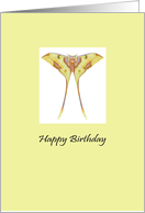 Birthday moon moth card