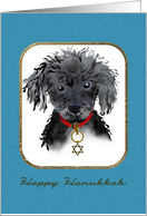 Toy poodle wearing a Star of David on its collar, Hanukkah card