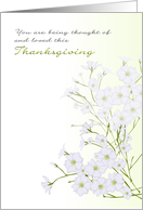 1st Thanksgiving alone bereaved, baby's-breath flowers card