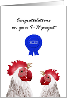 Congratulations on 4-H project success, Happy chickens card