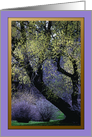 Spring Trees at Finch Arboretum ~ Blank card