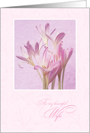 Mother's Day for Wife - Soft Pink Flowers card