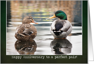 Perfect Pair - Anniversary Card