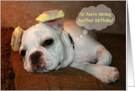 Happy Birthday dog with hair rollers on ears, thought bubble, French Bulldog! card