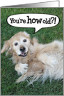 Funny Golden Retriever Birthday Card