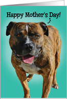 Mother's Day Card From Your Awesome Pitbull card