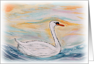 The swan is swimming on a beautiful sunny day card