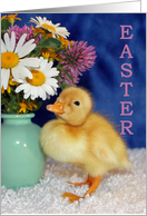 Easter Blessings - Baby Duckling with Wild Flowers card