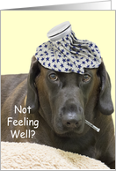Chocolate Lab Not Feeling Well Card