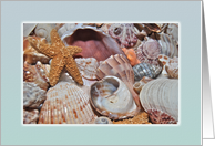 Sea Shell Collection, Blank Note Card