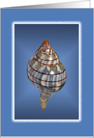 Seashell collection, blank Card