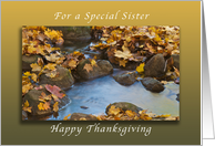 Happy Thanksgiving for a Special Sister, Autumn Maple leaves card