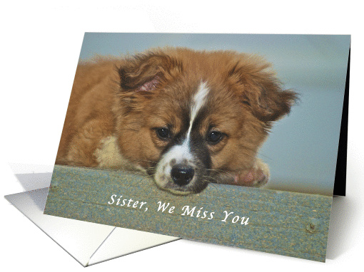 We Miss You Sister, Cute Puppy with Lonely Looking Eyes card (1192838)