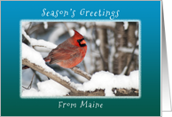 Season's Greetings from Maine, Cardinal in the Snow. card