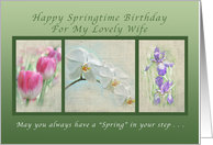 Happy Springtime Birthday for a Wife, Flower Collection card