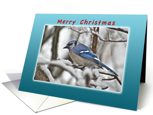Merry Christmas, Bluejay on Snow Covered Branches card (980697)