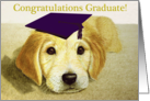 Congratulations Graduate--Golden Retriever Puppy With Cap Card