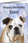 Happy Birthday Son!--Adorable English Bulldog Puppy card