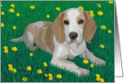 Beagle in a green field with dandelions--Blank note card