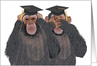 Chimpanzee Hear, See No Evil - Graduation Congratulations for Twins card