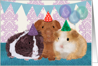 Guinea Pigs in Birthday Hats, Birthday Party Invitation card
