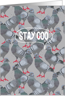 Stay Coo (Stay Cool) City Pigeon, Good Bye card